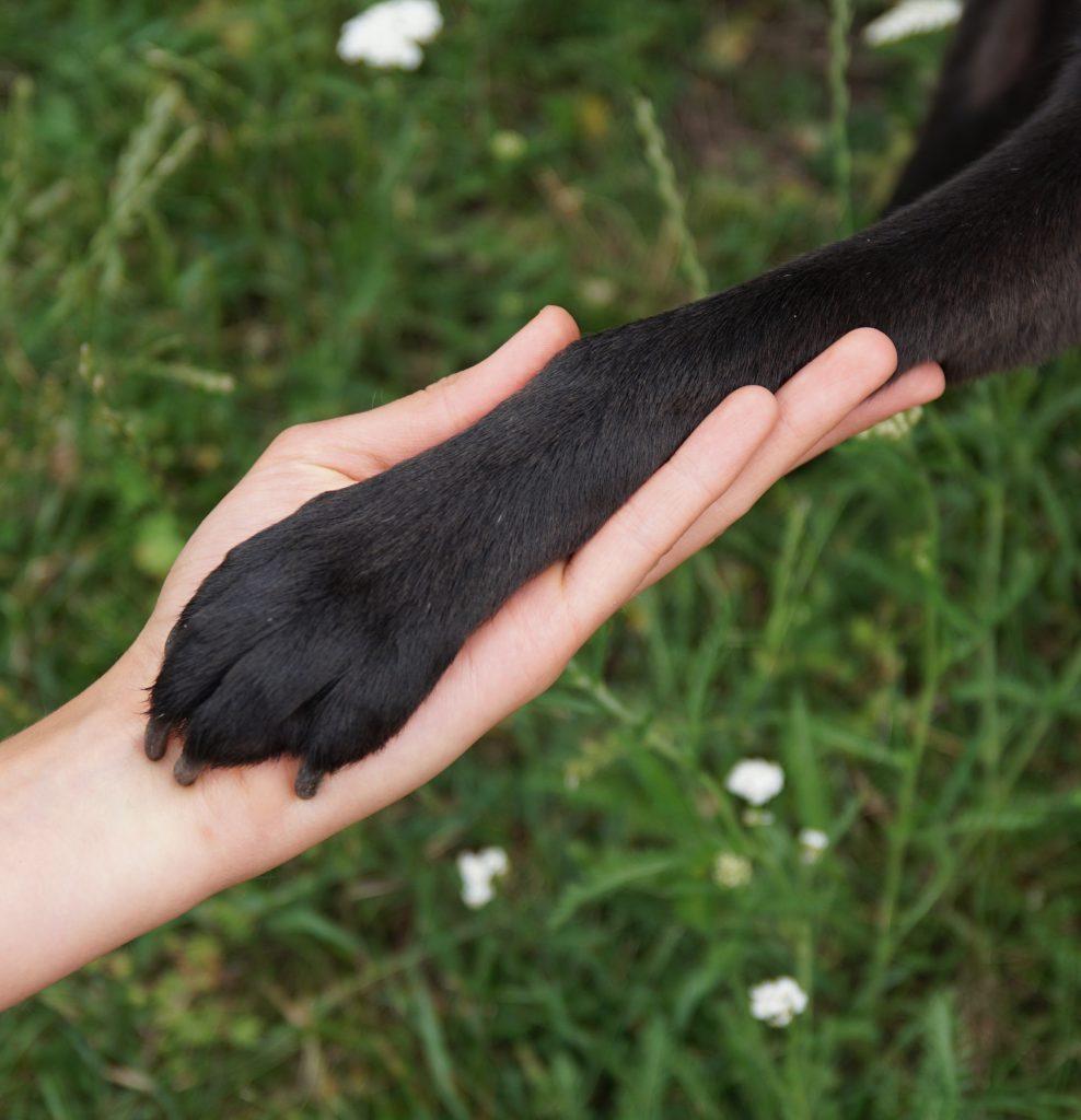 AG Tierschutz